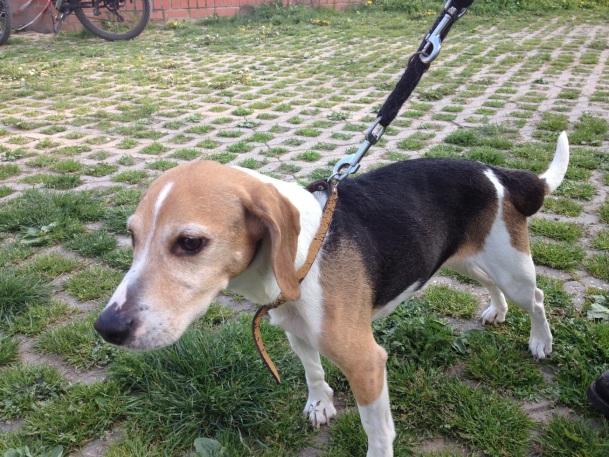 Frieda aus dem Tierheim in Gera
